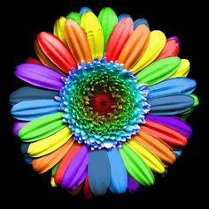 tout est multicolore - Page 5 13359110