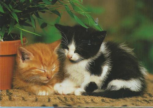 Les chats 7ddb5912