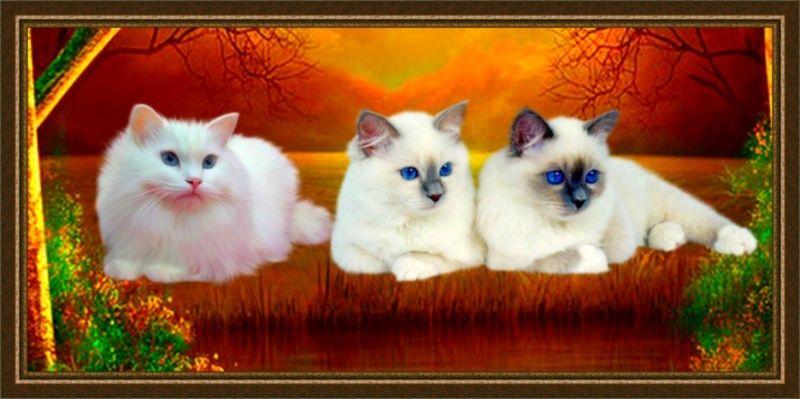 Les chats - Page 4 883a1610