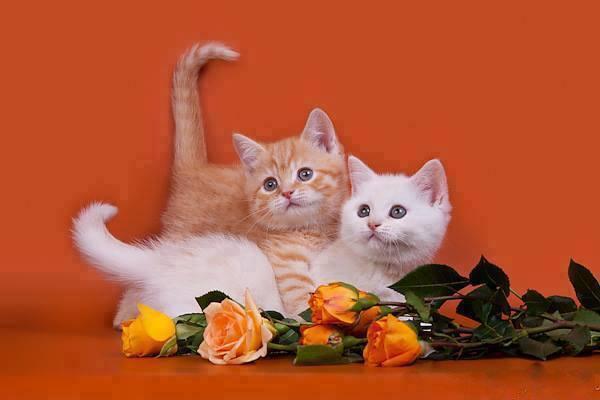 Les chats - Page 3 A1379910