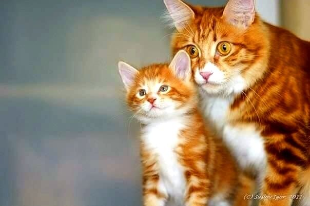 Les chats A17b5110