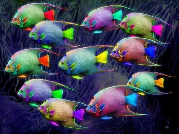 tout est multicolore - Page 39 C1534d10