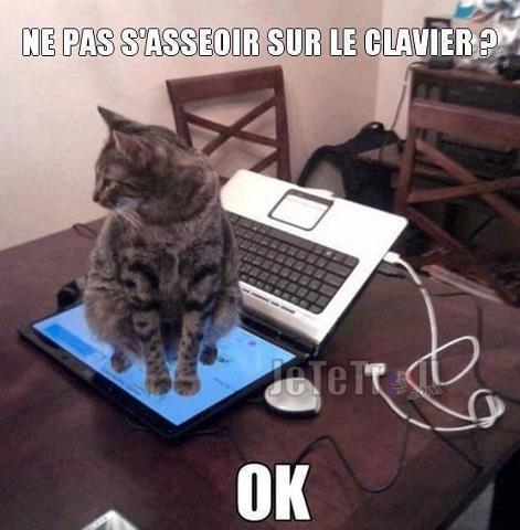 Les chats - Page 39 Cid_6710