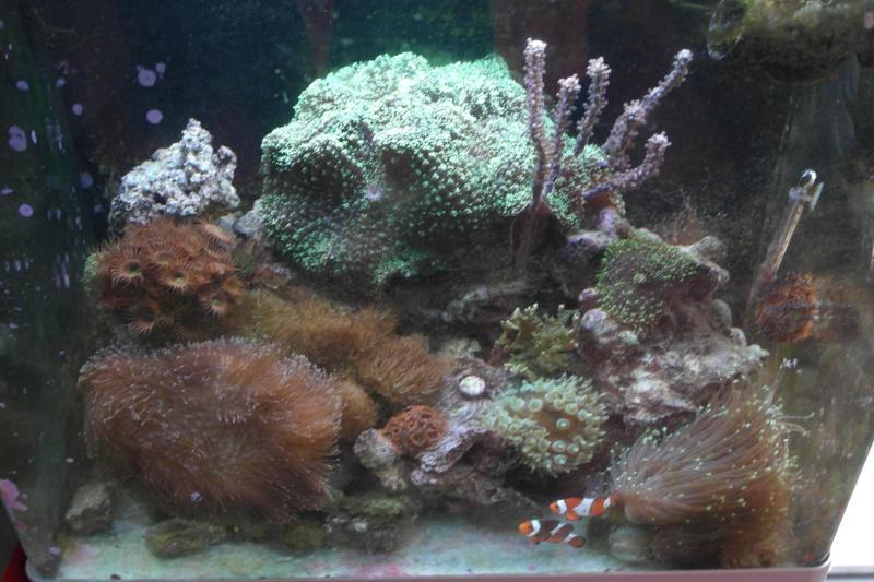 mon bac un red sea ma 130 D Sam_3411