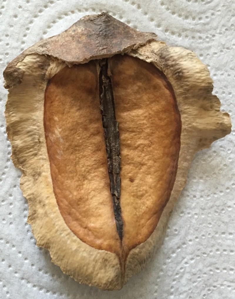 Identification de cette plante Quel_a10