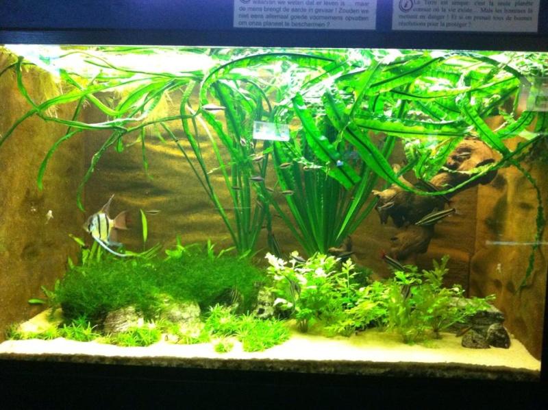 Aquarium de Bruxelles  12036310