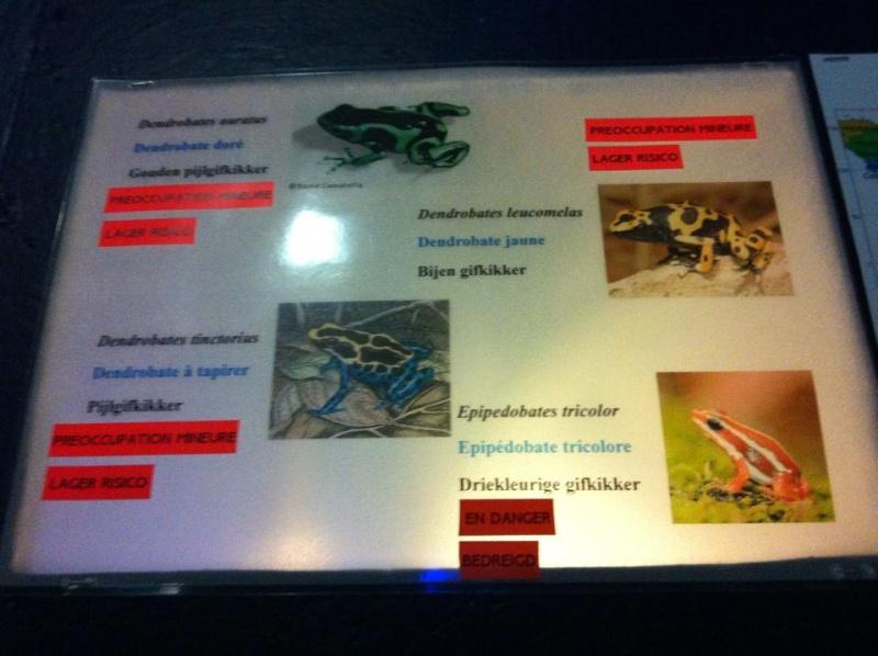 Aquarium de Bruxelles  12039310