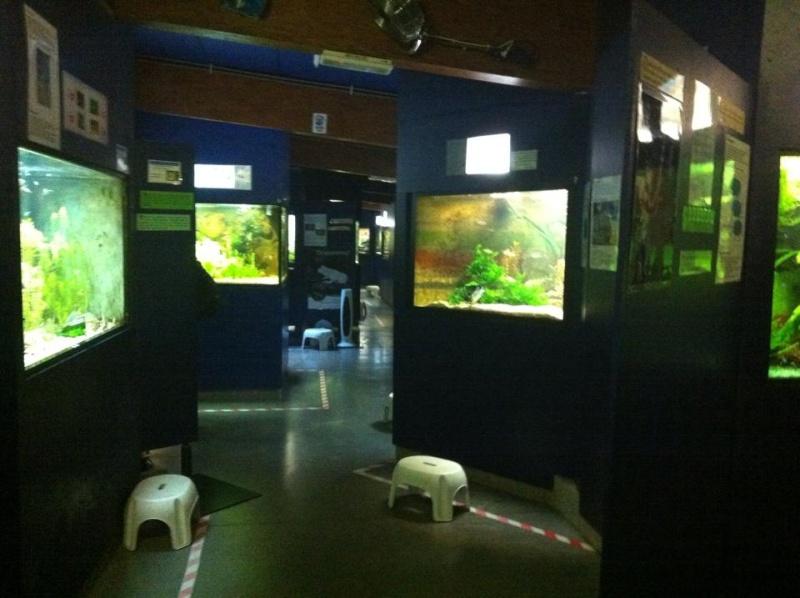 Aquarium de Bruxelles  12096110