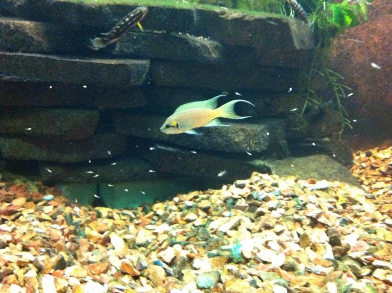 Aquarium de Bruxelles  12105811