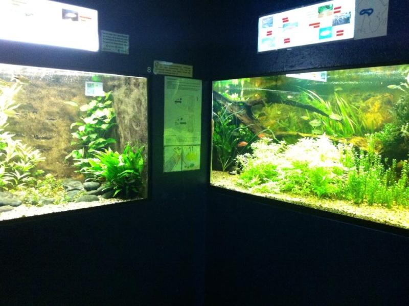 Aquarium de Bruxelles  12105911