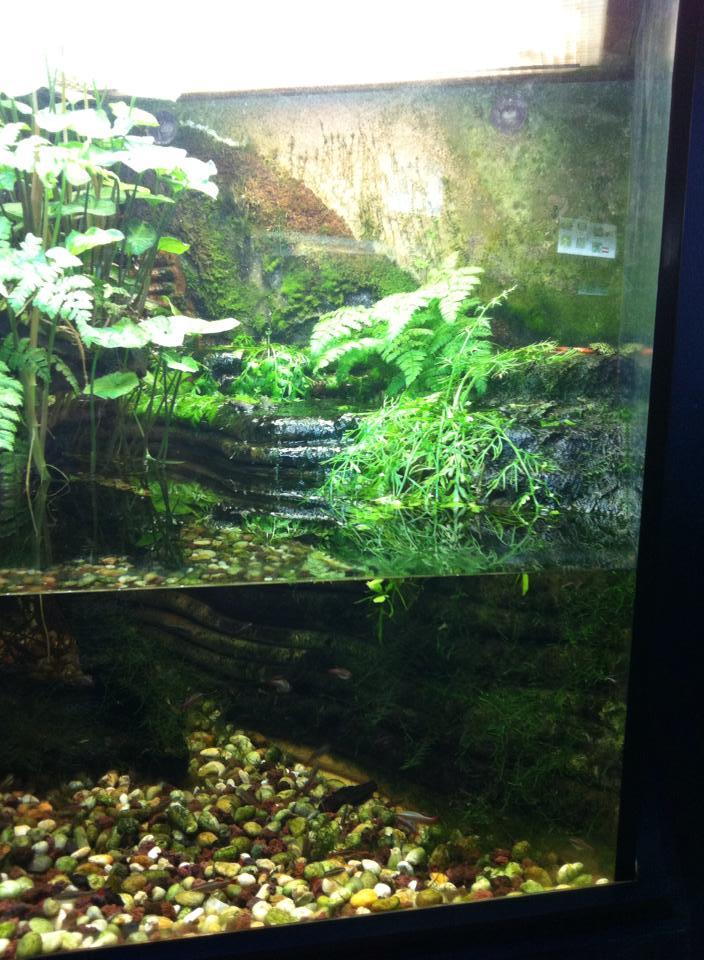 Aquarium de Bruxelles  12108212