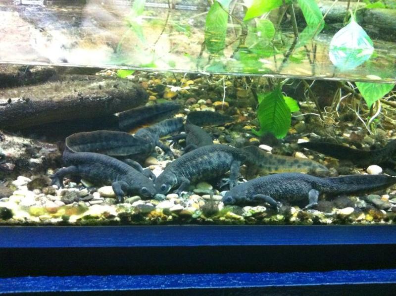 Aquarium de Bruxelles  12112112