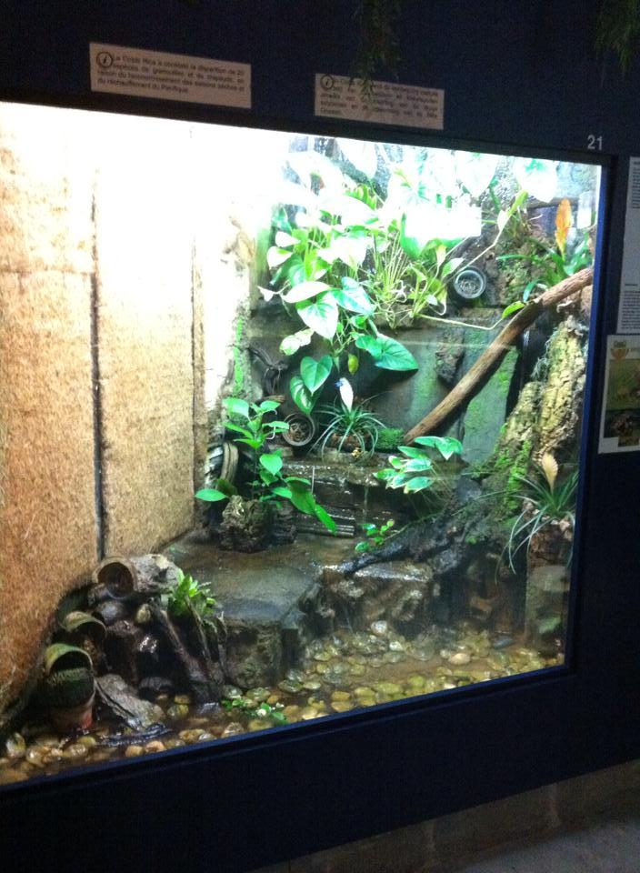 Aquarium de Bruxelles  12122812