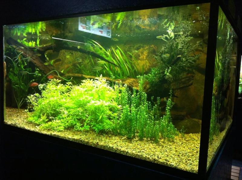 Aquarium de Bruxelles  210