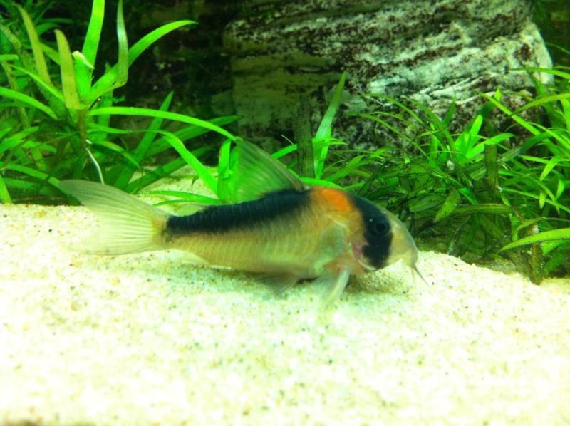 Aquarium de Bruxelles  410