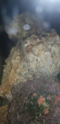 Quelle sorte d'algue 20191210