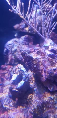 Cyanobacterie ? 20191212