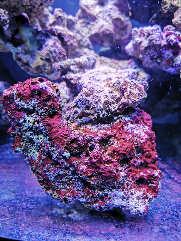 Cyanobacterie ? Img_2011