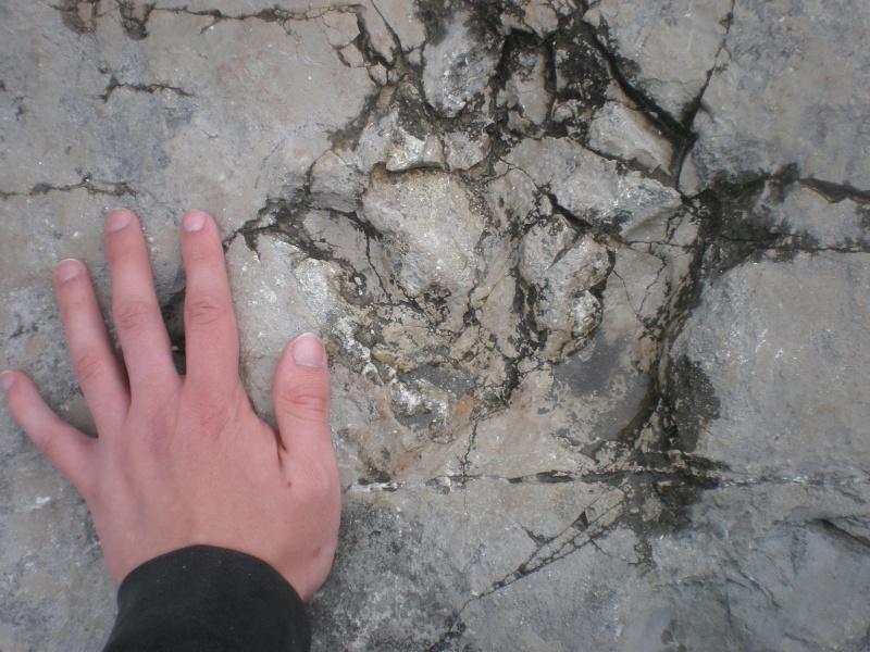 Die Dinosaurier-Spuren von Lavini di Marco P4090010
