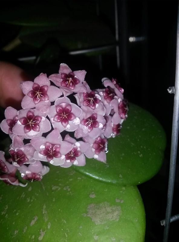 Blüten 2016 - Seite 4 Img-2017