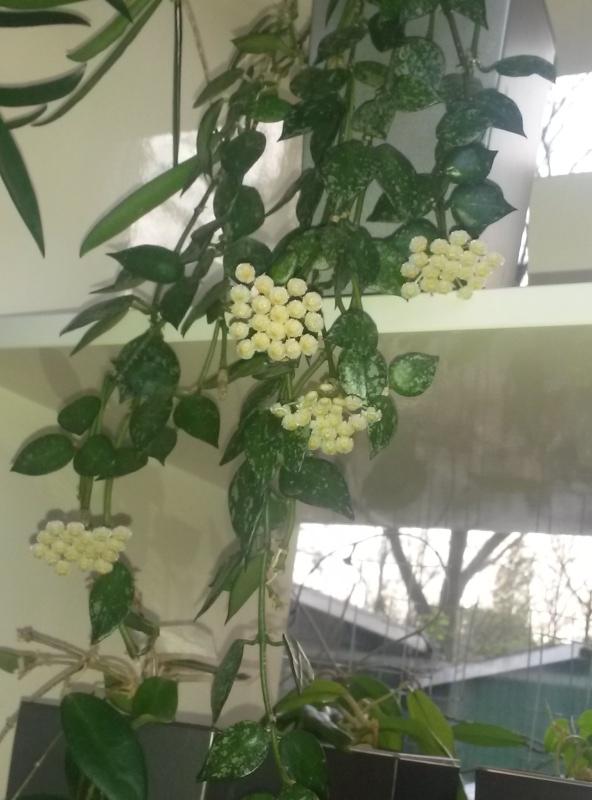 Blüten 2016 - Seite 4 Img-2018