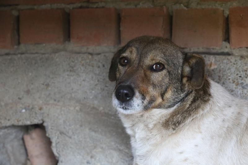 Alba, chienne magnifique, née en 2012 Hx9a4716