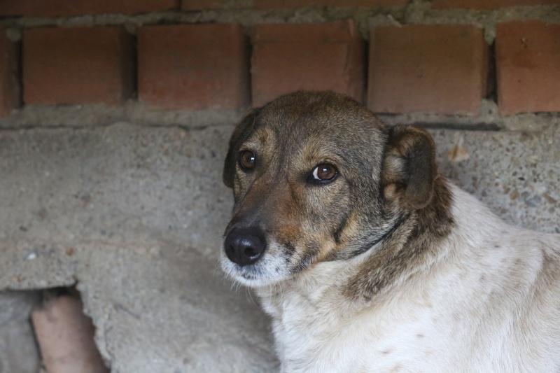 Alba, chienne magnifique, née en 2012 Hx9a4718