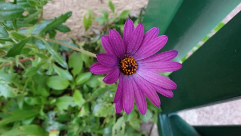 Les fleurs de nos jardins Dsc03310