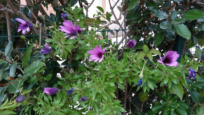 Les fleurs de nos jardins Dsc03311