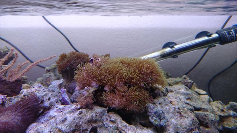 les 500 litres d'eau de mer d'angy et ced  Dsc_0122