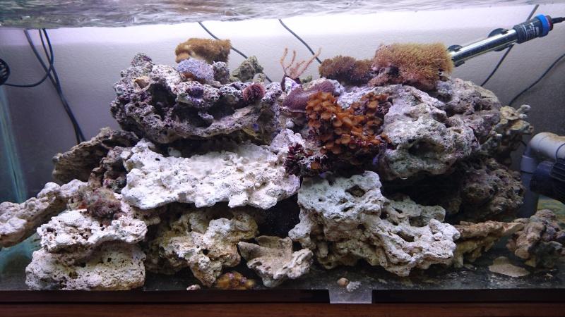 les 500 litres d'eau de mer d'angy et ced  Dsc_0127
