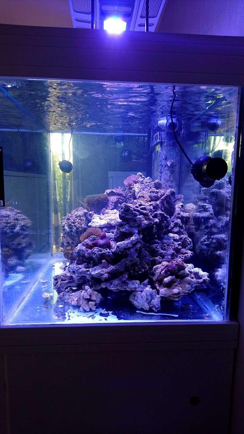 les 500 litres d'eau de mer d'angy et ced  Dsc_0143