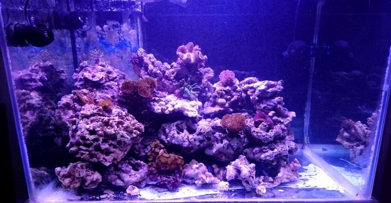 les 500 litres d'eau de mer d'angy et ced  Dsc_0144