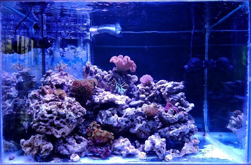 les 500 litres d'eau de mer d'angy et ced  Dsc_0146