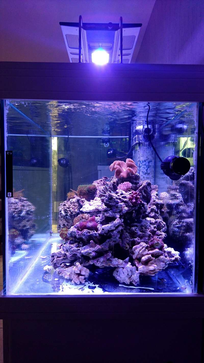 les 500 litres d'eau de mer d'angy et ced  Dsc_0148