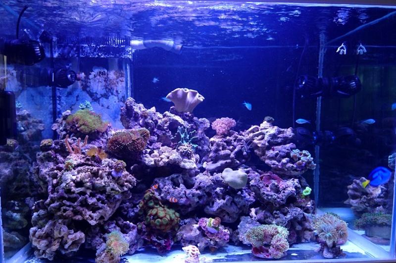 les 500 litres d'eau de mer d'angy et ced  Dsc_0210