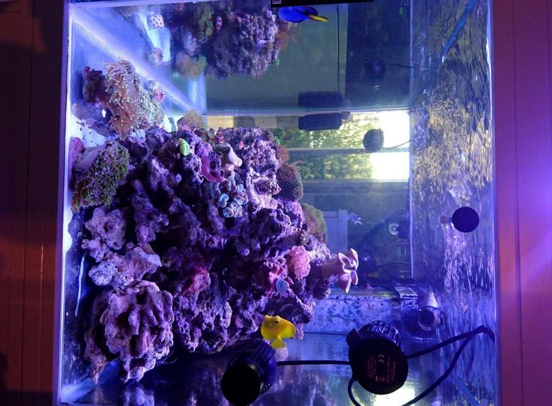 les 500 litres d'eau de mer d'angy et ced  Dsc_0213