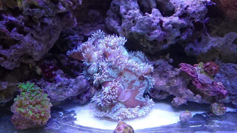 les 500 litres d'eau de mer d'angy et ced  Dsc_0315