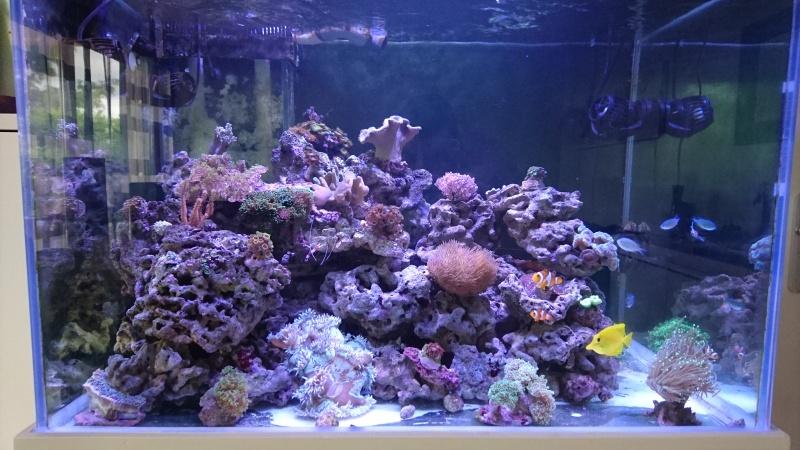 les 500 litres d'eau de mer d'angy et ced  Dsc_0316