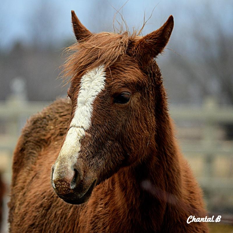 cheval 1c10