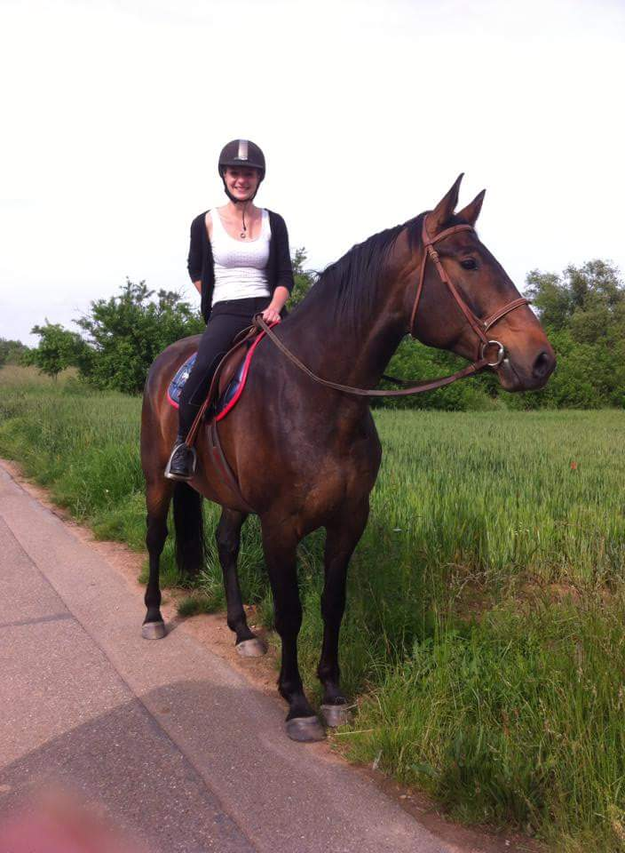 CHERCHEUR DE VERNAY - cheval de sport belge de 2008 - Page 2 Receiv29