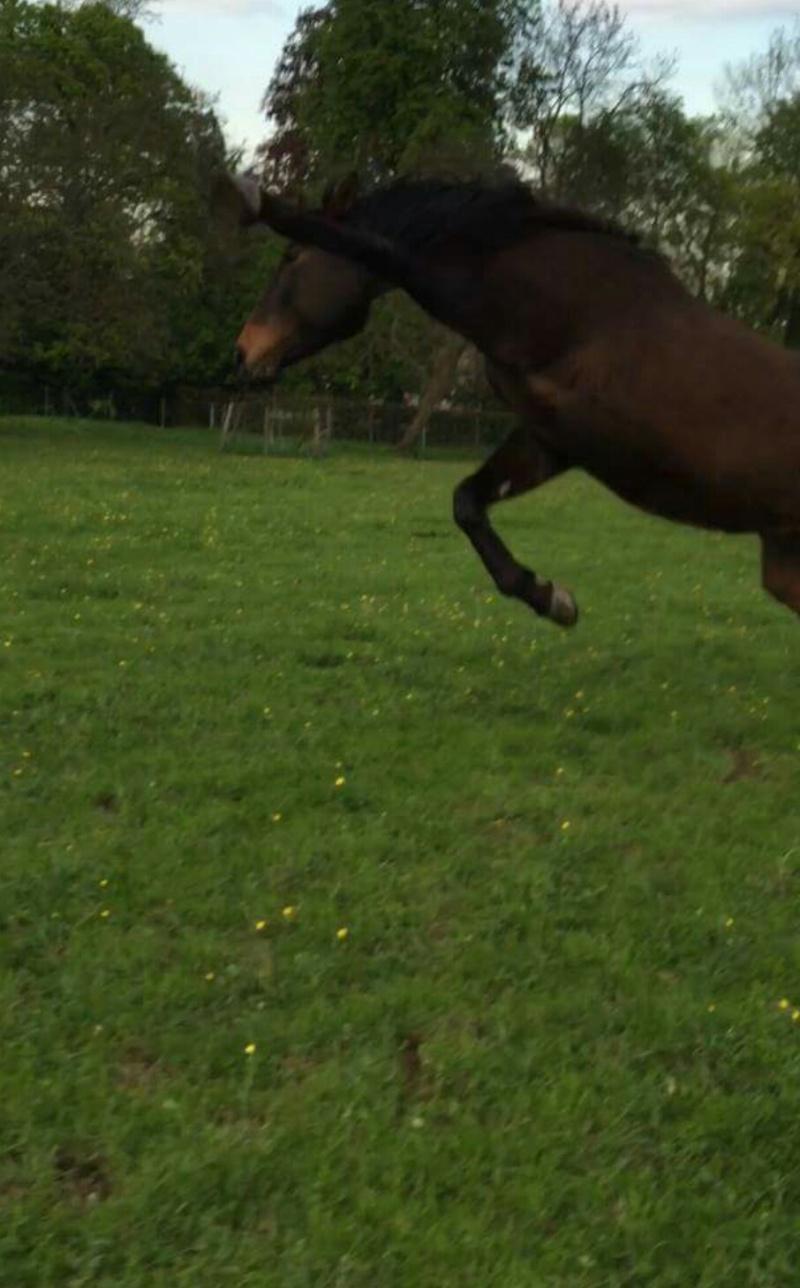CHERCHEUR DE VERNAY - cheval de sport belge de 2008 - Page 2 Screen15