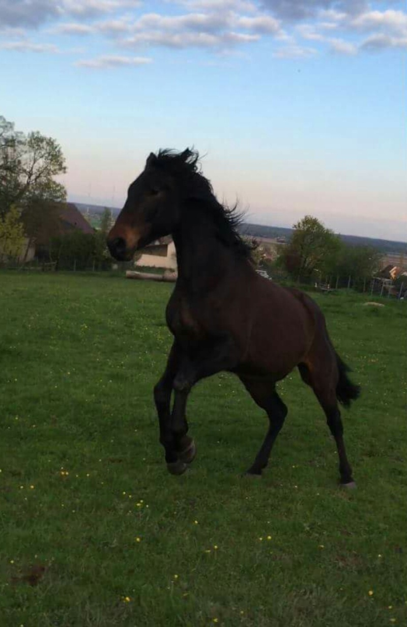 CHERCHEUR DE VERNAY - cheval de sport belge de 2008 - Page 2 Screen17