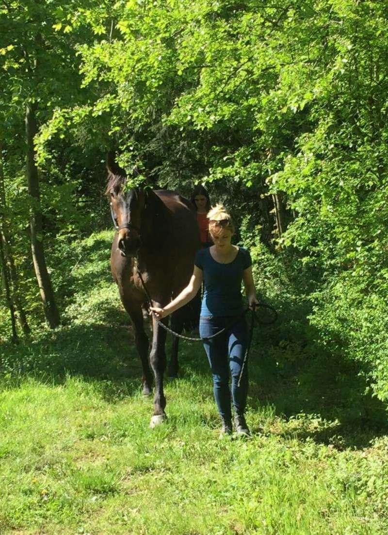 CHERCHEUR DE VERNAY - cheval de sport belge de 2008 - Page 2 Screen18