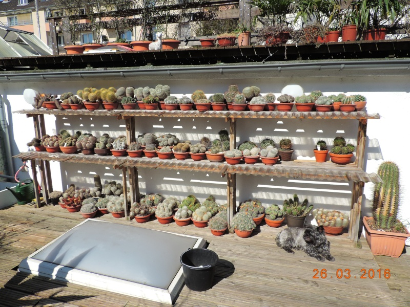 Cacti and Sukkulent in Köln, every day new flowers in the greenhouse Part 139 Bild_111