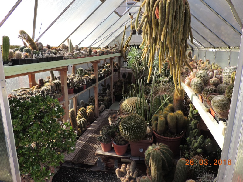 Cacti and Sukkulent in Köln, every day new flowers in the greenhouse Part 139 Bild_121