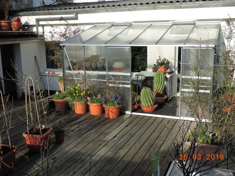 Cacti and Sukkulent in Köln, every day new flowers in the greenhouse Part 139 Bild_122