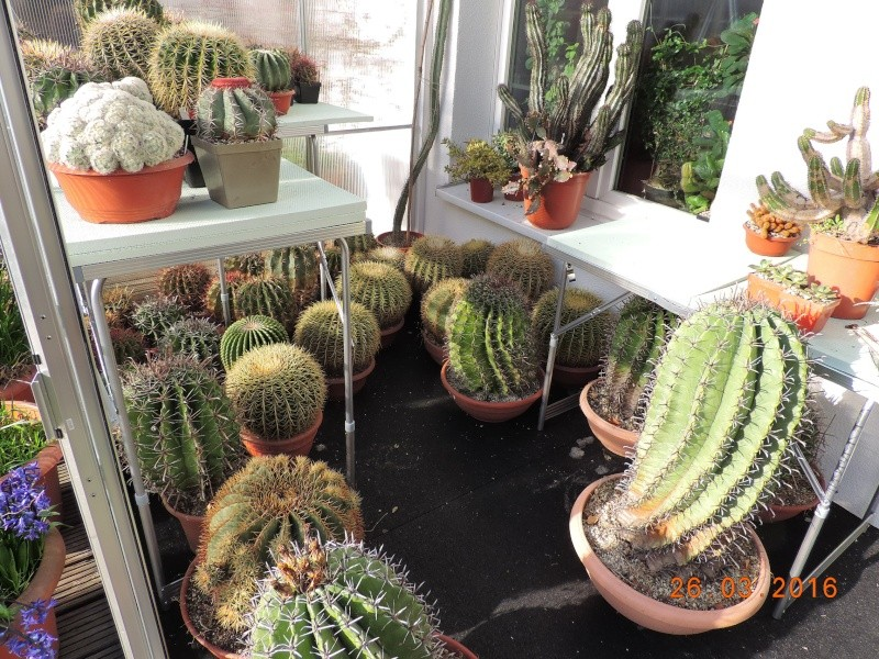 Cacti and Sukkulent in Köln, every day new flowers in the greenhouse Part 139 Bild_123