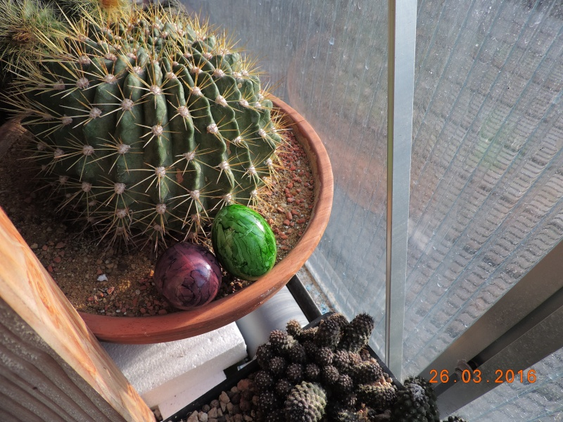 Cacti and Sukkulent in Köln, every day new flowers in the greenhouse Part 139 Bild_126