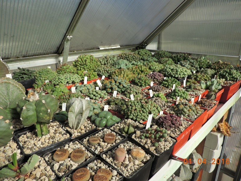 Cacti and Sukkulent in Köln, every day new flowers in the greenhouse Part 140 Bild_143